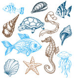 Marine life collection. A set of different marine animals Royalty Free Stock Images