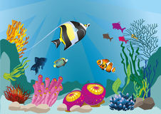 Marine life Royalty Free Stock Photos