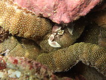 Marine life crab Stock Photos