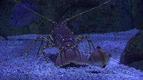 Marine life crawling undersea. Fish and marine life underwater stock video