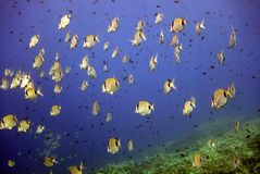 Marine life. In Croatian Vis island Adriatic sea Royalty Free Stock Photo