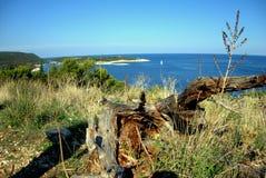 Marine life. In Croatian Vis island Adriatic sea Stock Photography