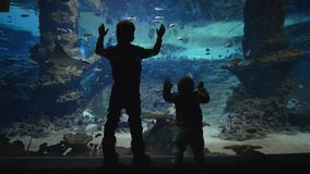 Marine life, curious children watch fishes swimming in large aquarium
