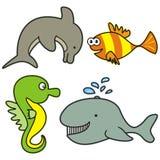Marine life Royalty Free Stock Images