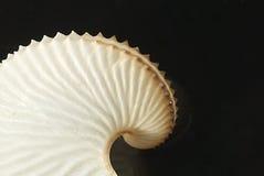 Marine Life Egg Casing Royalty Free Stock Photography
