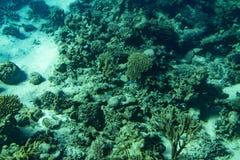 Marine Life en Mer Rouge récif coralien de la Mer Rouge avec les coraux durs, les poissons et le ciel ensoleillé brillant par l'e photos libres de droits