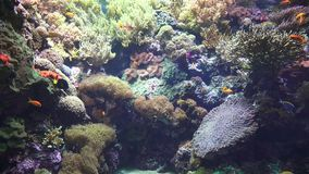 Marine Life Fish Coral Undersea stock video