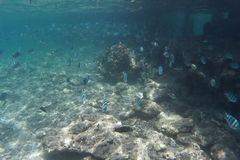 Marine Life - Fish Stock Image