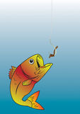 Marine life. Fish takes the bait the hook Stock Images