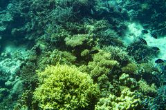 Marine Life in het Rode Overzees rood overzees koraalrif met harde koralen, vissen en zonnige hemel die door schoon water glanzen royalty-vrije stock afbeeldingen