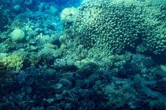Marine Life in het Rode Overzees rood overzees koraalrif met harde koralen, vissen en zonnige hemel die door schoon water glanzen royalty-vrije stock foto