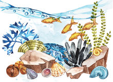 Marine Life Landscape - the ocean and the underwater world with different inhabitants. Aquarium concept for posters, T Royalty Free Stock Photos