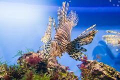 The marine life. The marine animals and other inhabitants of the seas and oceans Stock Images