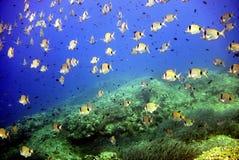 Marine life. In adriatic sea Stock Images