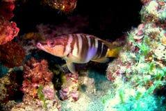 Marine life. In Croatian Vis island Adriatic sea Royalty Free Stock Image