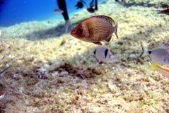 Marine life. In Croatian Vis island Adriatic sea Stock Photo