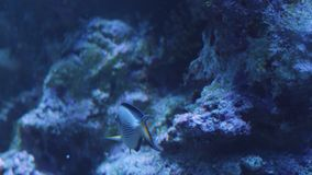 The marine life of Ocean stock video footage