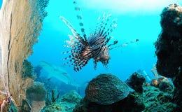 Marine life on ocean reef Royalty Free Stock Photos