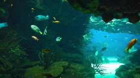Marine life in the oceanarium of Lisbon, Portugal stock video