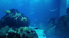 Marine life in the oceanarium of Lisbon, Portugal stock video footage