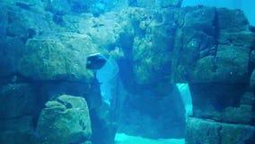 Marine life in the oceanarium of Lisbon, Portugal stock footage