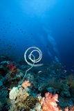 Marine life in the Red Sea. Stock Image