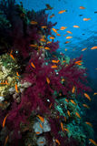 Marine life in the Red Sea. Stock Photos