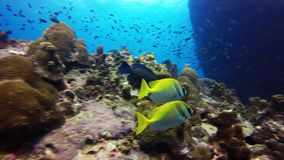 Marine life in the reef stock video