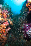 Marine life. Royalty Free Stock Photos