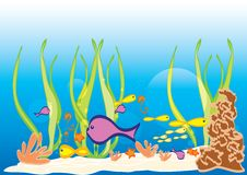Marine Life in Sea Stock Images