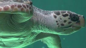 Marine Life And Sea Animals Stock Photography