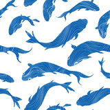 Marine life seamless texture. Fish background. Underwater patter Stock Image