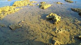 Marine life at shallow depths stock footage
