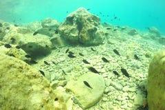 Marine life in the shallows. Royalty Free Stock Photos
