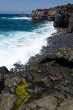 Marine life on tropical coast Royalty Free Stock Image