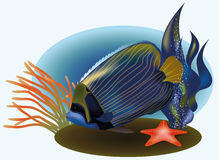 Marine life with tropical fish Royalty Free Stock Photography