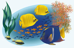 Marine life with tropical fishes vector illustration