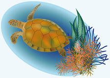 Marine life with turtle. Vector illustration Stock Image