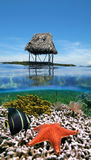 Marine life under Caribbean hut Royalty Free Stock Photo