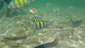 Marine life under clear sea water stock video