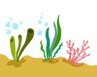 Under water plants Stock Photography