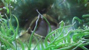Marine Life Undersea stock video