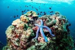Marine life underwater. Beautiful Marine life underwater world, star fish stock photo