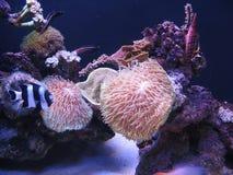 Marine life underwater Royalty Free Stock Images
