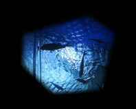 Marine life underwater Stock Image