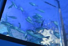 Marine life underwater Stock Photo