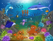 Marine life. Vector illustration of cartoon marine life with fish, shark, dolphin, octopus and other species Stock Photos