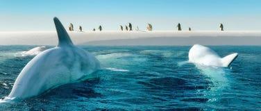 Marine mammal Stock Image