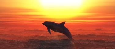 Marine mammal Stock Images