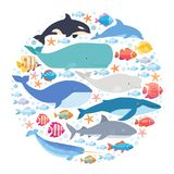 Marine mammals and fishes set in circle. Narwhal, blue whale, dolphin, beluga whale, humpback whale, bowhead and sperm. Whale vector on white isolated Royalty Free Stock Photo